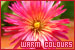 Colors - Warm